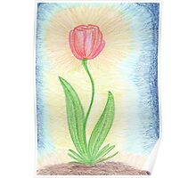 0507 - Red Tulip Shining Poster