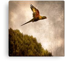 Just Naturally Free Canvas Print