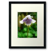 Australian Native Violet... Framed Print