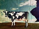 Surreal Bovine Atlas by Kitty Bitty