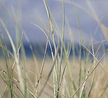 bilinga beach grass by Tim Richardson