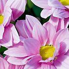 Sweet Pink by Nala