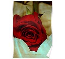 red rose in violin case © 2010 patricia vannucci  Poster