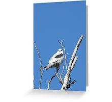 Black-shouldered Kite Greeting Card