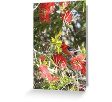 Scarlet Honeyeater Greeting Card