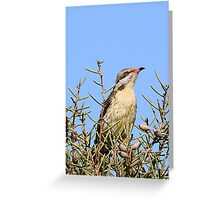 Spiny-cheeked Honeyeater Greeting Card