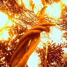 Reach for the Sun! by kate conway