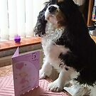 Charlie Girl (Charlotte Rose) is 5 Today by AnnDixon