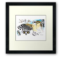Southern Boobook Owl Framed Print