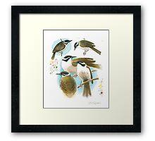 Strong-billed Honeyeater Framed Print