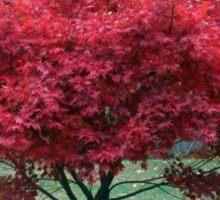 Red Dwarf Maple Tree Sticker