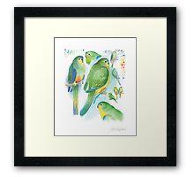 Orange-bellied Parrot Framed Print