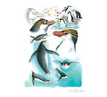 Royal Penguin Photographic Print