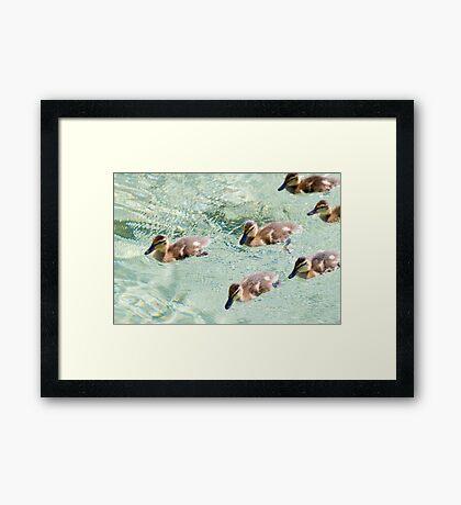 Rat Pack Framed Print
