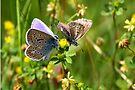 Butterfly Dance by Jo Nijenhuis