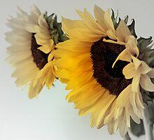 Sunburst by OpalFire