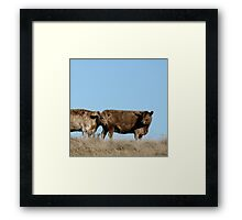 two brown cows Framed Print