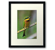 Little bee-eater, Kenya Framed Print