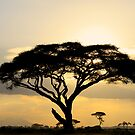 African savanna at sunset by Graeme Shannon