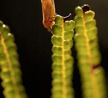 orange bug 30.09.08 by Peter Chrismas