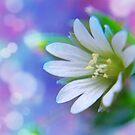 Beautiful Dreamer by Sheri Nye
