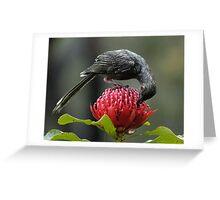 wattle bird, waratah 30-10-05 #1 Greeting Card
