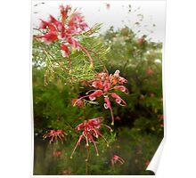 Australian Native Flower Series 2 Poster