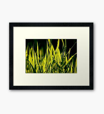 Leaves of Grass (for Walt Whitman) Framed Print