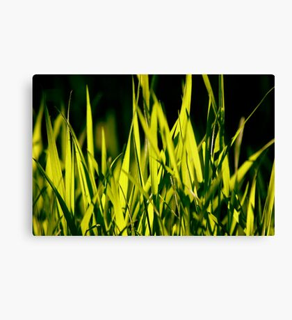 Leaves of Grass (for Walt Whitman) Canvas Print