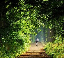 A cyclist's summer-morning dream by jchanders