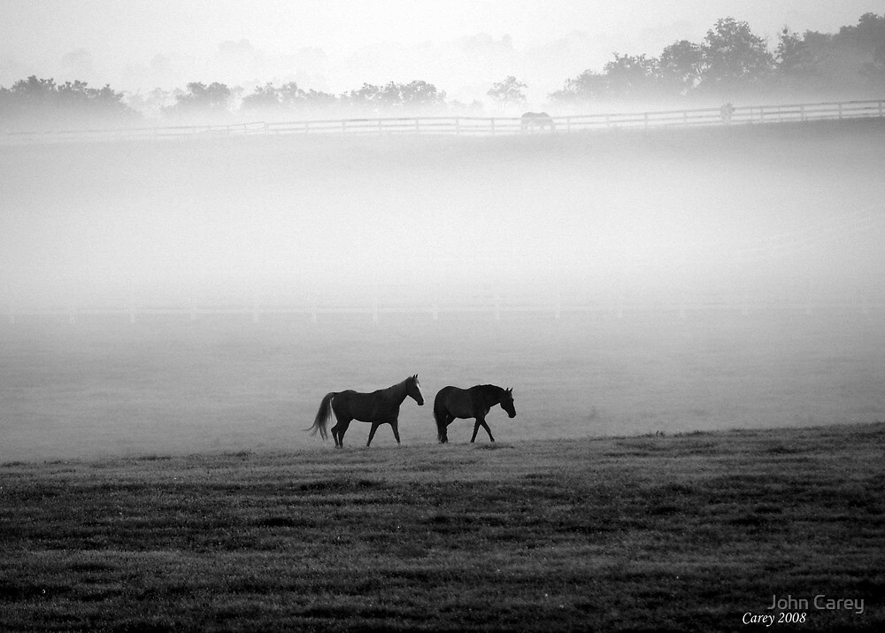 Companionship - misty morning horses by John Carey