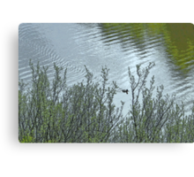 Lone Duck on Silvery Pond Canvas Print