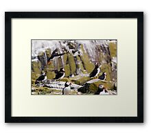 Puffin Party Framed Print