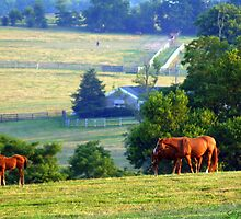 the upper pasture - kentucky horses in the evening fields by John Carey