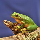 Treefrog by Hans Kool