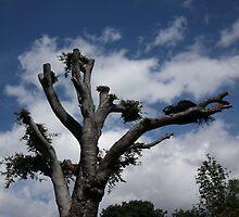 reach for the sky by shaun-e