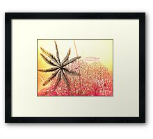 A feather in Gordons cap! Framed Print