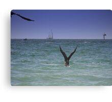 Birds Diving For Dinner Canvas Print