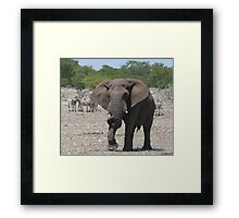 Happy expectations Framed Print