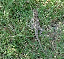 aligator lizard by jdphoto86