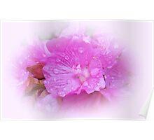 Posh Pink Poster