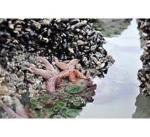 Starfish Alley Photographic Print