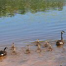 Our Little Goose Family by teresa731