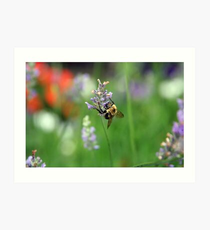 Flight of the Bumblebee Art Print