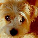 My Sweet Daisy   ^ by ctheworld