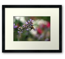 Bokeh Bee Framed Print