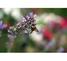 Bokeh Bee Photographic Print