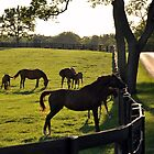 Horses at the Fence - Kentucky Mares and Foals by John Carey