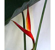 Exotic Plant Photographic Print
