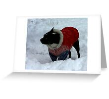 zoe in the snow Greeting Card